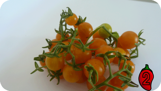 courrant gold rush cherry koktajlowy do doniczki na balkon nasiona pomidor pergole guacamole