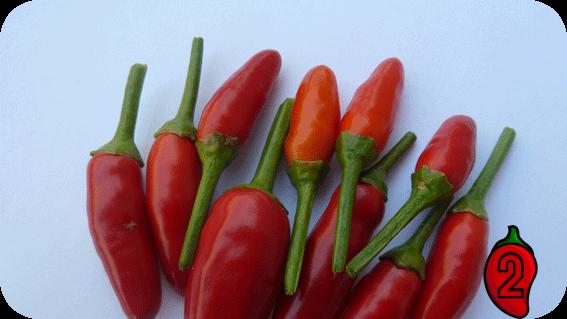Bird's Eye papryka nasiona hot chili na parapet balkon ostre papryki chilli sos