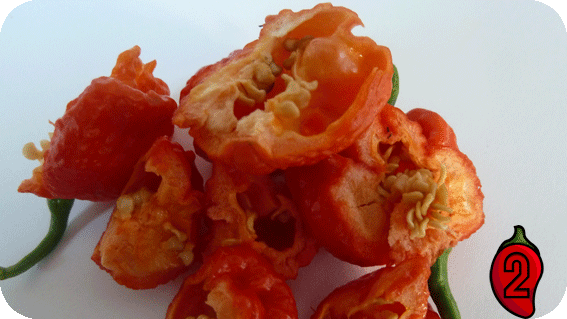 papryka carolina reaper nasiona hot chili na parapet balkon ostre papryki chilli sosy