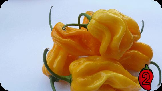 habanero yellow carolina reaper nasiona hot chili na parapet balkon ostre papryki chilli sos