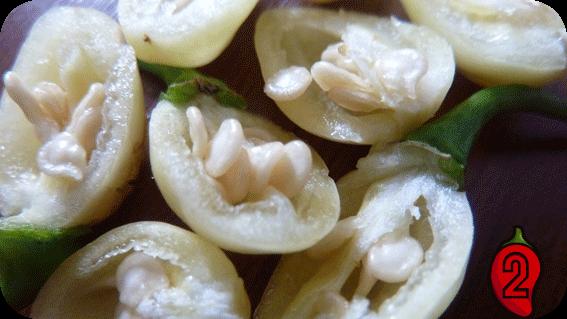 habanero white nasiona chili na parapet balkon peruvian chilli ostre papryki jedzenie sosik