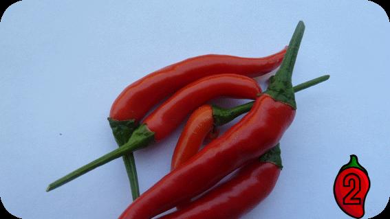 Thai Chili Rawit carolina reaper nasiona hot chili na parapet balkon ostre papryki chilli aji