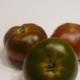 pomidor raf cherry koktajlowy do doniczki na balkon nasiona pomidor pergole sos