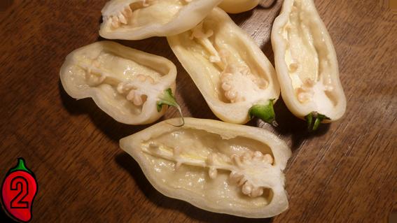 BHUT JOLOKIA white papryka nasiona hot chili na parapet balkon ostre papryki chilli sos