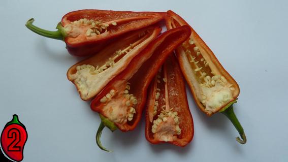 cyklon polskie jalapeno carolina reaper nasiona hot chili na parapet balkon ostre papryki chilli 2