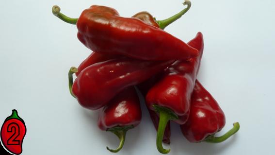 cyklon polskie jalapeno carolina reaper nasiona hot chili na parapet balkon ostre papryki chilli 4