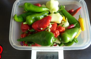 zbiory papryka carolina reaper nasiona hot chili na parapet balkon ostre papryki