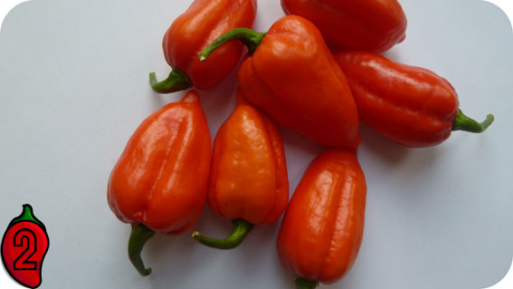 7pot douglah red chili papryka