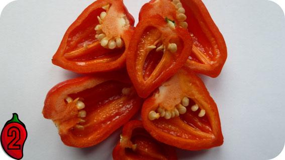 7pot douglah red chili papryka nasiona sklep