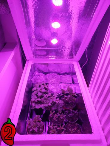 growbox-pali2razy