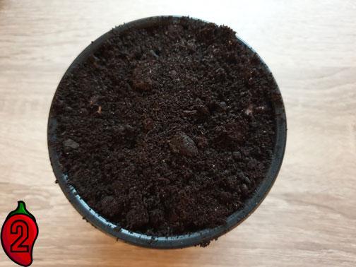wysiew i uprawa w doniczce