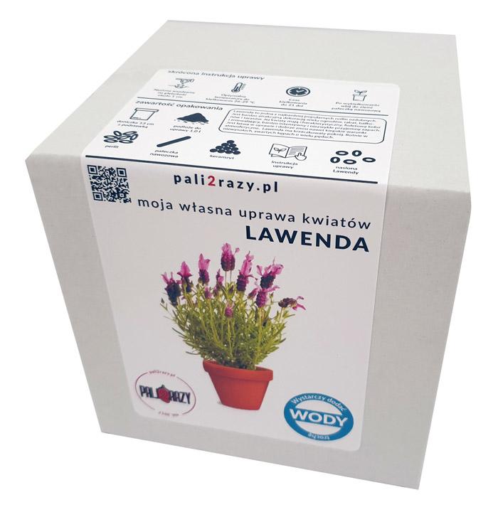 moja domowa uprawa zestaw do uprawy kwiatów Lawenda