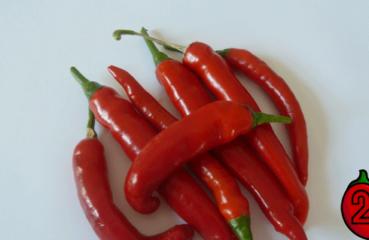 peperoni nasiona chili na parapet balkon pepperoni uprawa ostra papryka sos
