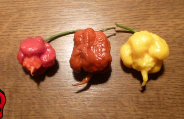 papryka carolina reaper nasiona hot chili na parapet balkon ostre papryki chilli sos kolory
