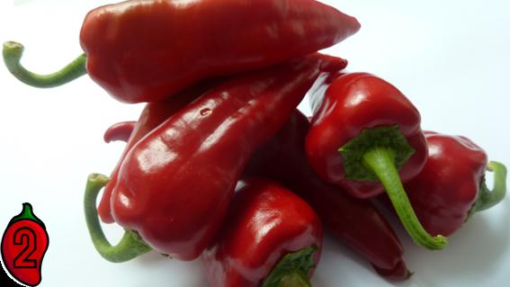 cyklon polskie jalapeno carolina reaper nasiona hot chili na parapet balkon ostre papryki chilli 3