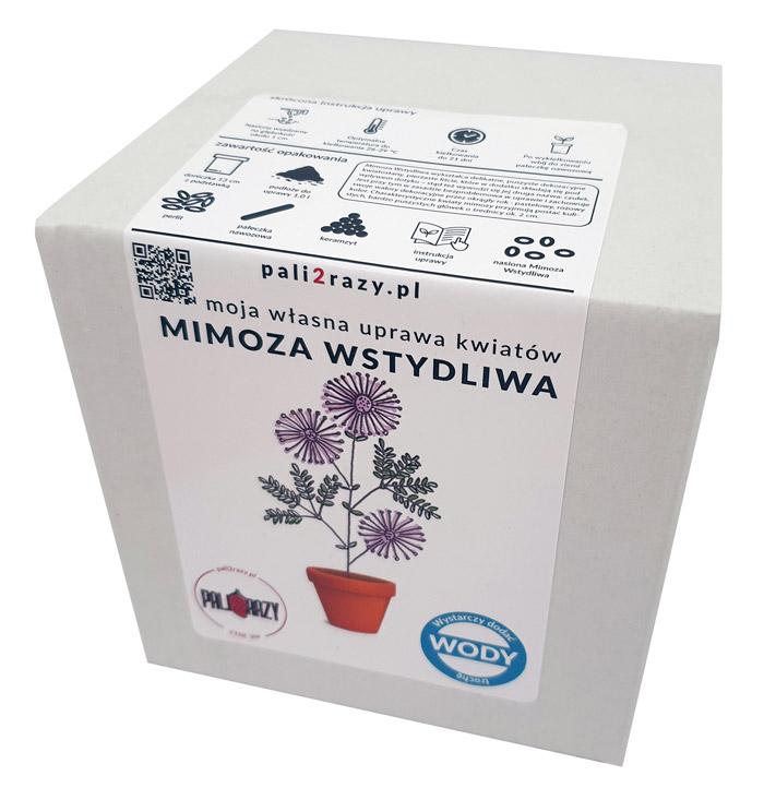 moja domowa uprawa zestaw do uprawy kwiatów Mimoza Wstydliwa